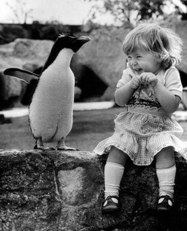 PenguinsAreCute