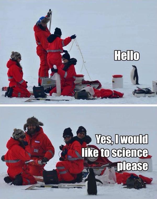 enthusiastic-penguin-meme